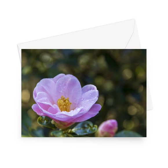 'Camellia with Raindrops' - High quality greeting card featuring my close up photograph of a camellia flower after a morning shower. Printed on high-quality 330gsm Fedrigoni card. Envelope supplied.
