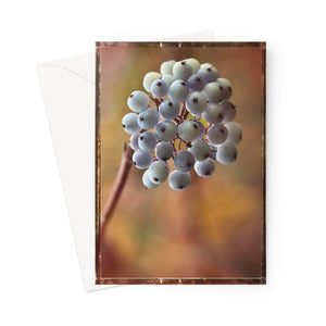 'White Berries' -  Greeting Card