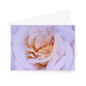 'Pink and Buttermilk Rose' - High quality greeting card featuring my close-up photograph of a beautiful, duo-toned rose bloom. Printed on high-quality 330gsm Fedrigoni card. Envelope supplied.