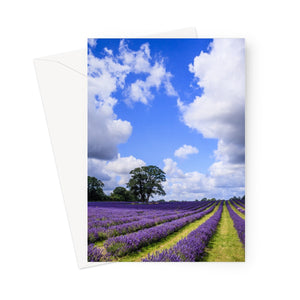 English Lavender and Summer Sky Greeting Card