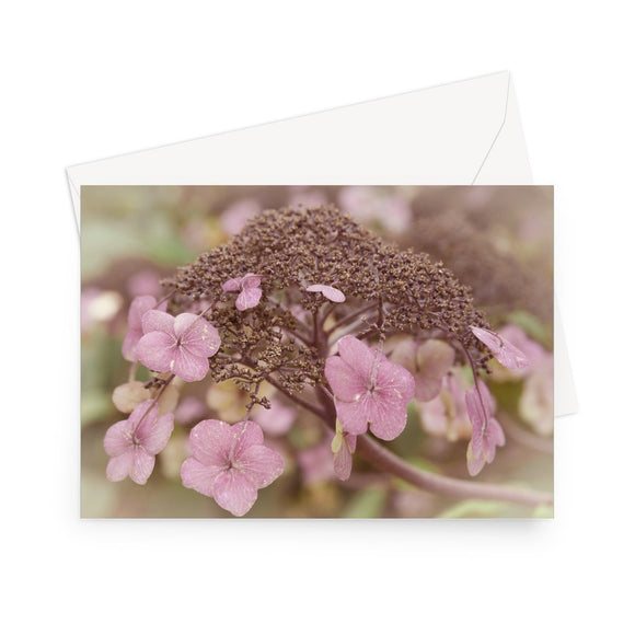 'Lacecap Hydrangea' - High quality greeting card featuring my close-up photograph of dusty pink, lacecap hydrangea. Printed on heavy duty 330gsm Fedrigoni card. Supplied with envelope.