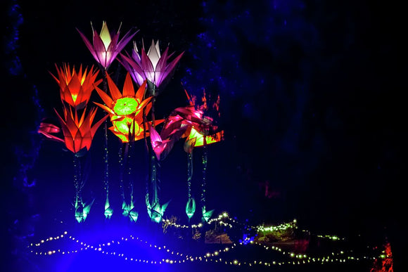 Glow at Wisley