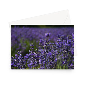 'Deep Purple'  -  High quality greeting card featuring my close up photograph of lavender.  Printed on high-quality 330gsm Fedrigoni card.  Envelope supplied.