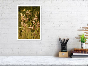 Golden Grass print