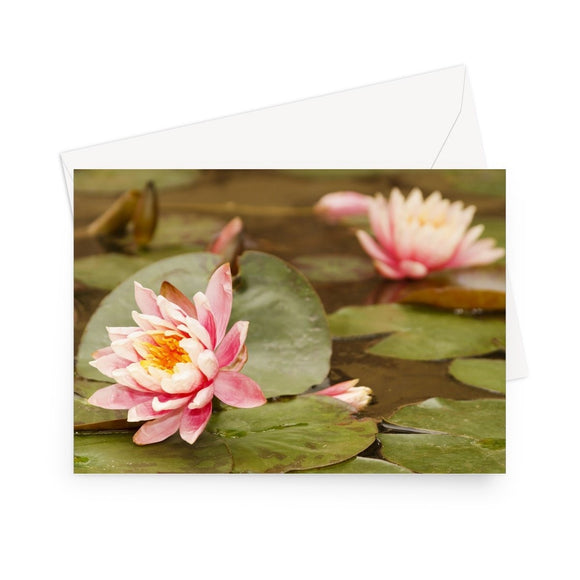 'Pink Waterlilies' - High quality greeting card featuring my close-up photograph of pink waterlilies. Printed on heavy duty 330gsm Fedrigoni card. Supplied with envelope.