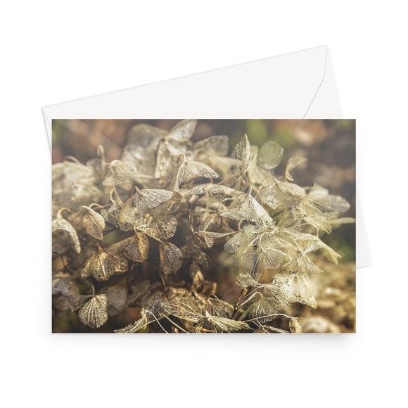 'Winter Hydrangea' - High quality greeting card featuring my close up photograph of a head of skeletal hydrangea blooms, some of which look like butterflies. Printed on high-quality 330gsm Fedrigoni card. Envelope supplied.