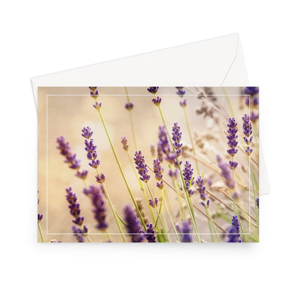 'Lavender Sunset' - High quality greeting card featuring my close up photograph of lavender sprigs, backlit by the setting sun. Printed on high-quality 330gsm Fedrigoni card. Envelope supplied.