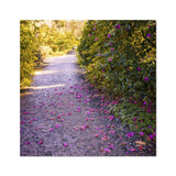 'Camellia Trail' -  Photo Art Print