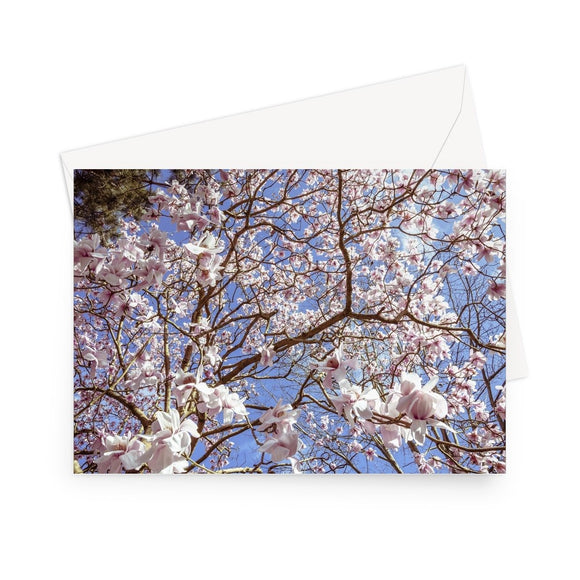 'Magnolia Grandiflora' - High quality greeting card featuring my  photograph of a breathtaking magnolia tree that has blooms the size of dinner plates that flutter in the breeze like the most graceful ballet dancers. Printed on high-quality 330gsm Fedrigoni card. Envelope supplied.