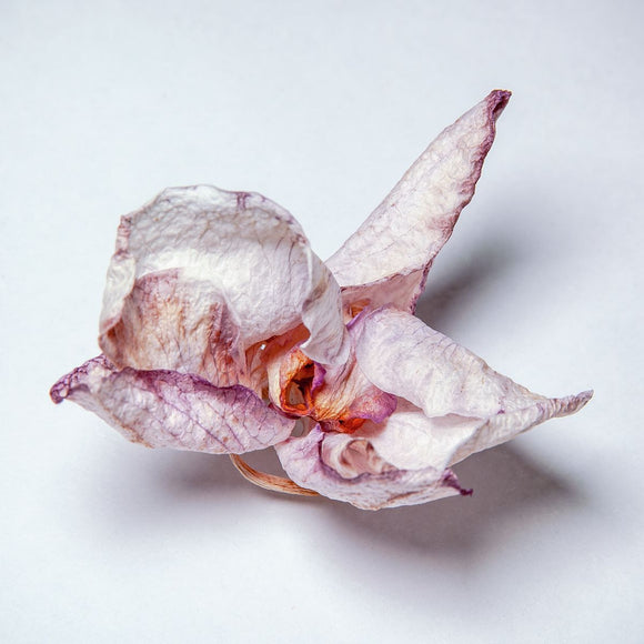 Dried Orchid Flower