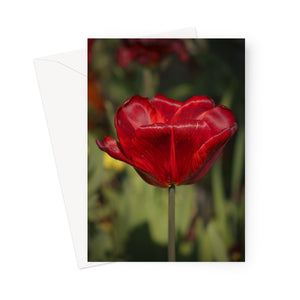 'Red Hot' -  Greeting Card