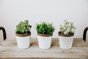 White Planters With Natural Rim [4 styles]
