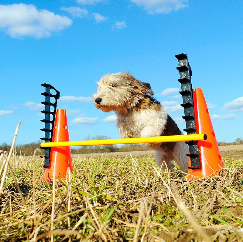 Hurdle Set Agility FitPAWS® - Pawzitive