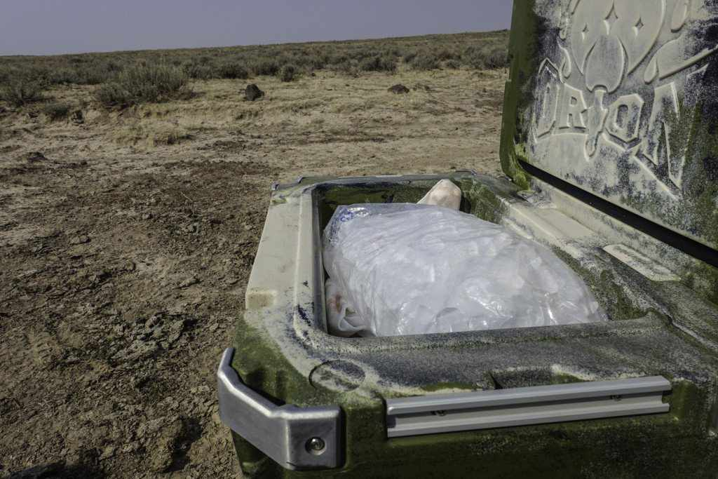 Orion Coolers 45 filled with ice and antelope quarters
