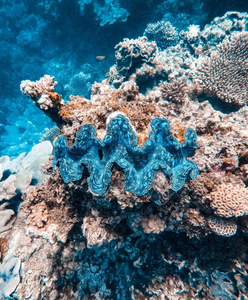 Image of a giant clam by Instagram user Amy Mercer