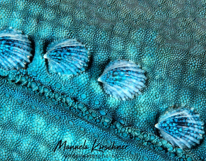 Image of a Blue Sea Star by Instagram user Manuela Kirschner