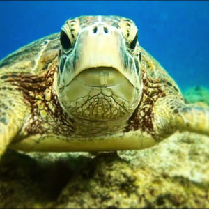 Sea Turtle - What's up dude.jpg