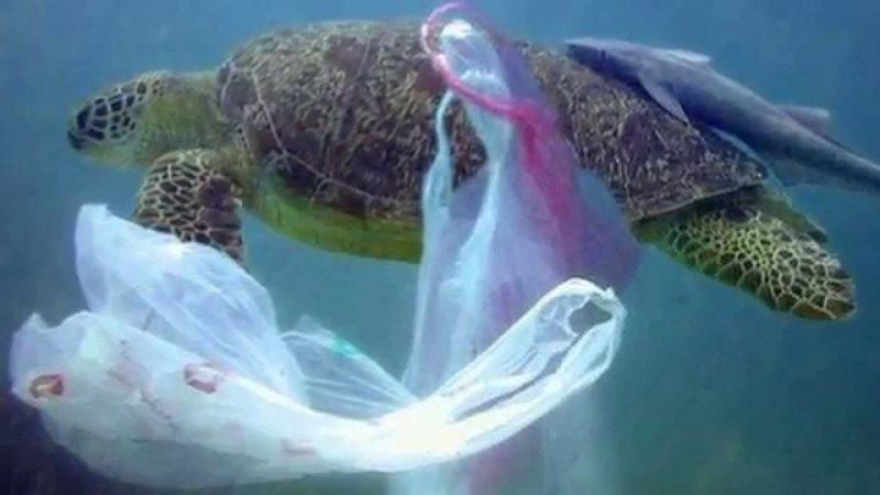 Ocean plastic is killing sea turtles