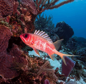 Shore Buddies fish nibling on coral reef.jpg