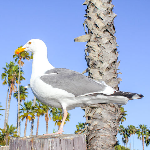 Photo of of seagull from dropbox