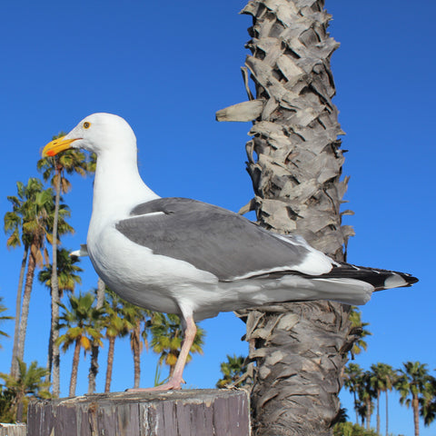 Stephen Seagull of Shore Buddies