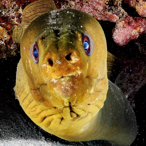 Moray Eel image from Instagram