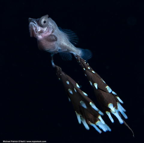 Gibberfish image from Instagram user @mpophotography