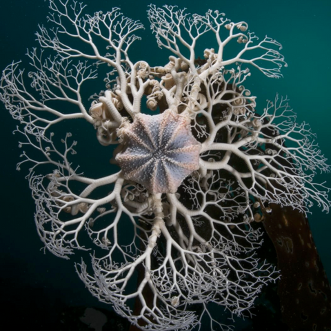 Basket Star image from @justinhofman Instagram