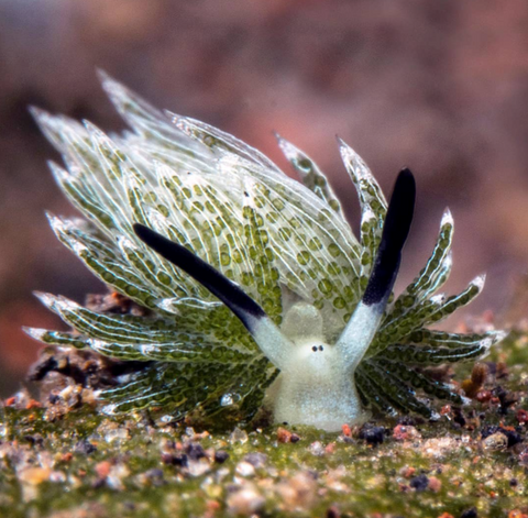 Sea Slug photo by William Zoo on Instagram
