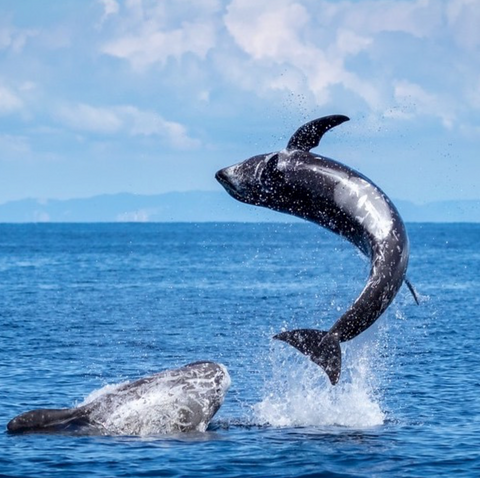 Photo of playful Humpback Whales by Instagram user Jill (@jillma2sh21)