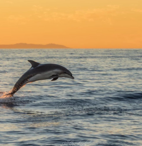 Image of a dolphin jumping by Instagram, user Jill @jillma2sh21