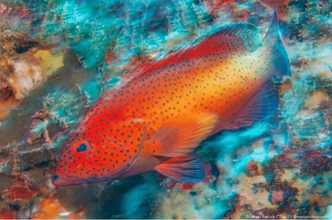 Photo of a red grouper by Michael Photography
