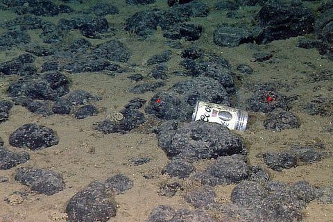 can on bottom of ocean floor.jpg