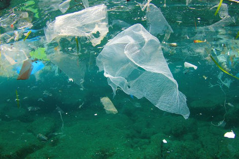 Floating trash in the Garbage patch.jpg