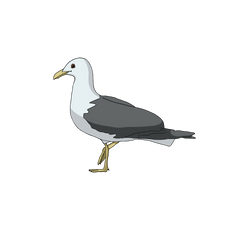 Stephen Seagull.png