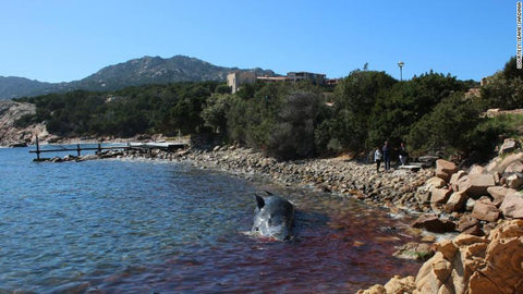 Dead whale with over 49 pounds of plastic found in Italy near Sicily.jpg