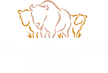 Bear Mountain Bison