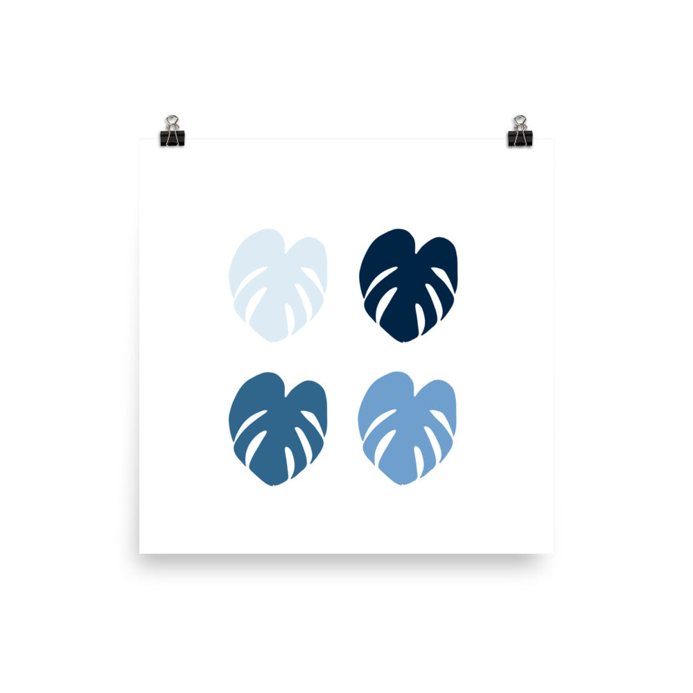 Monstera Blues - Large