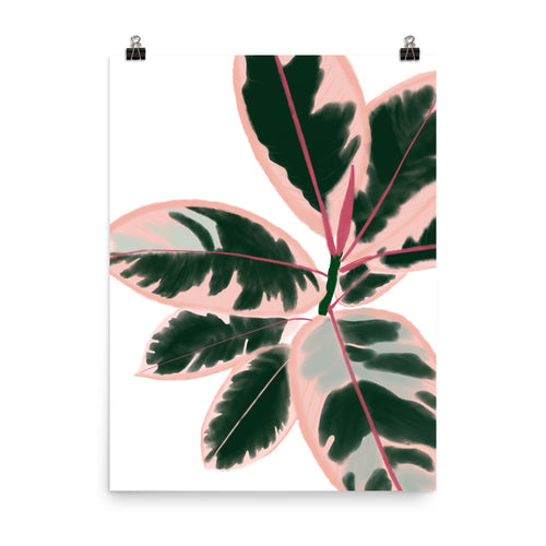 Ruby Rubber Plant - Large