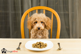 How to pick the right food for your Dog