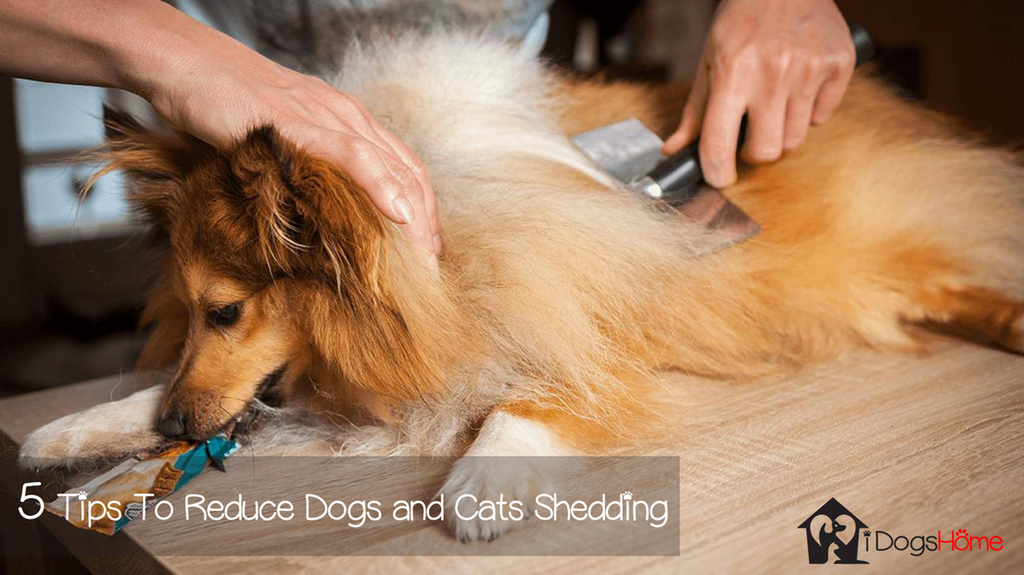 Reduce-Dogs-and-Cats-Shedding