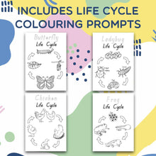Life Cycle Craft Box