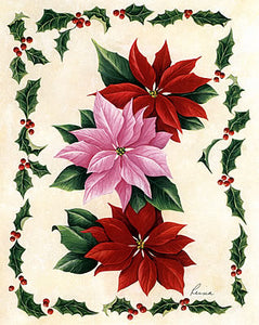 Red-Pink Poinsettias