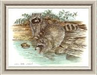 Reflections Raccoon