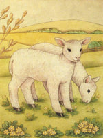 Country Lambs