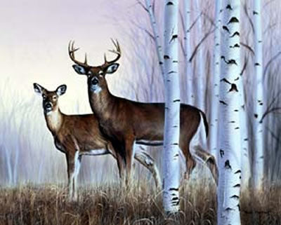 White Tailed Deer Aspens