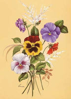 Colourful Pansies