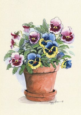 Potted Pansies