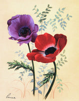 Poppy Anemone Purple
