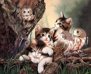 Kittens And Owls